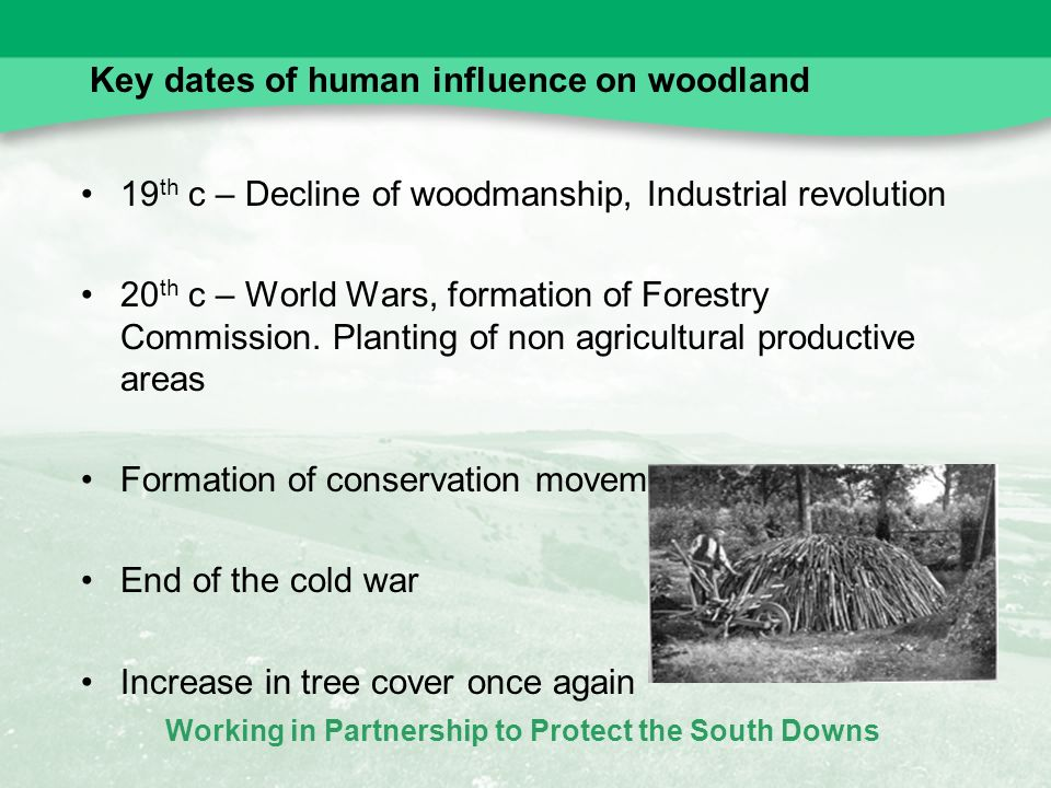 Working in Partnership to Protect the South Downs Key dates of human influence on woodland 19 th c – Decline of woodmanship, Industrial revolution 20 th c – World Wars, formation of Forestry Commission.