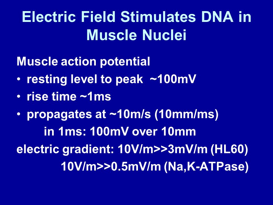 Electric Field Stimulates DNA in Muscle Nuclei Muscle action potential resting level to peak ~100mV rise time ~1ms propagates at ~10m/s (10mm/ms) in 1