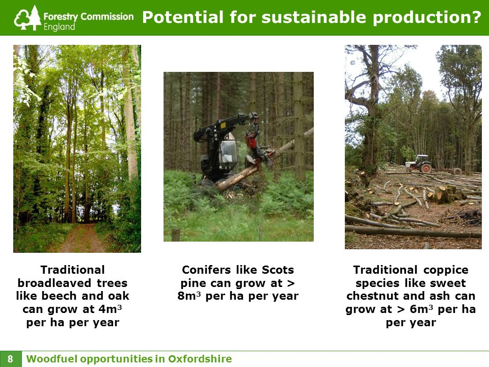 Woodfuel opportunities in Oxfordshire 8 Potential for sustainable production? Traditional broadleaved trees like beech and oak can grow at 4m 3 per ha