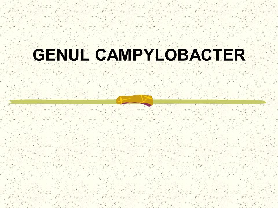 GENUL CAMPYLOBACTER