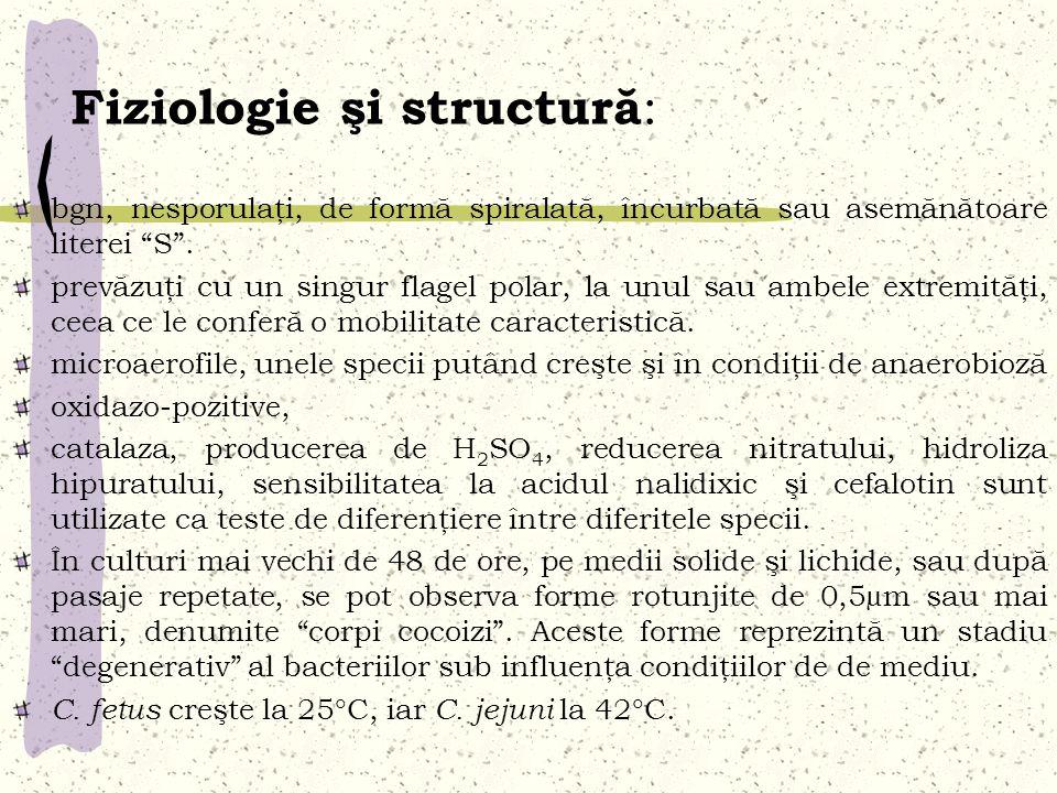 Fiziologie şi structură : bgn, nesporulaţi, de formă spiralată, încurbată sau asemănătoare literei S. prevăzuţi cu un singur flagel polar, la unul sau