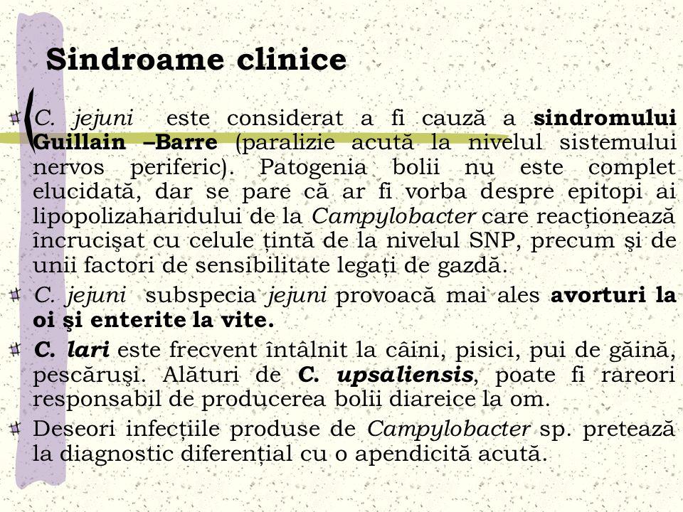 Sindroame clinice C. jejuni este considerat a fi cauză a sindromului Guillain –Barre (paralizie acută la nivelul sistemului nervos periferic). Patogen