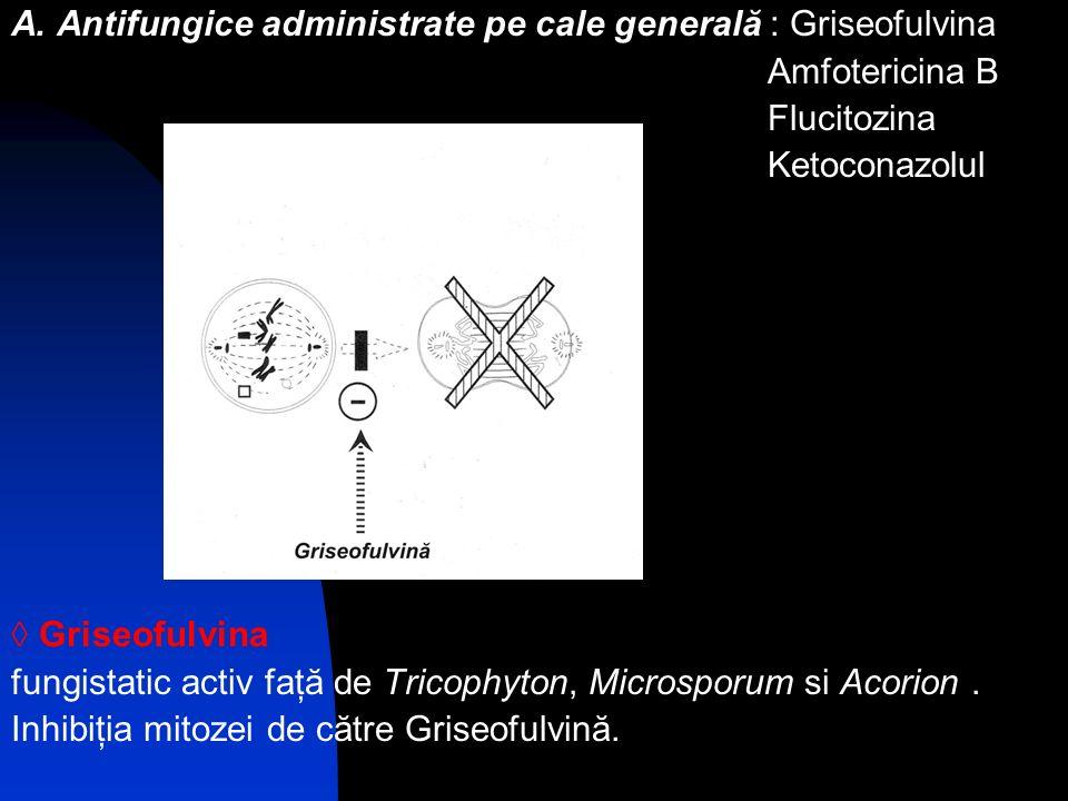 A. Antifungice administrate pe cale generală : Griseofulvina Amfotericina B Flucitozina Ketoconazolul Griseofulvina fungistatic activ faţă de Tricophy