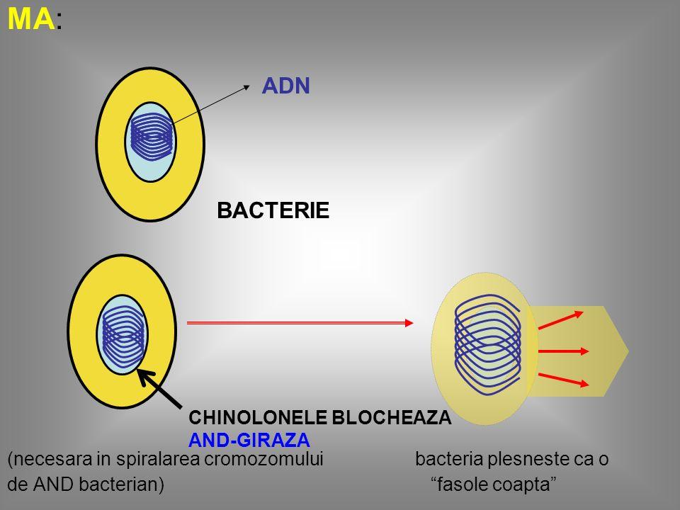 S.A.: ultralarg:CG+; CG-; BG- aerobi si anaerobi Mycoplasma, Chlamydia, Rickettsia UT: infectii urinare joase; infectii de prostatita (prostatitele acute si cronice); infectii cu transmitere sexuala (uretrite acute, cervicite acute, rectite acute, faringite acute gonococi); infectii gastrointestinale; infectii osteoarticulare; osteomielite acute si cronice cu BG-; infectii respiratorii: bronsite cronice (ciprofloxacina) Adm.: orala 2 prize; 1 priza i.v.
