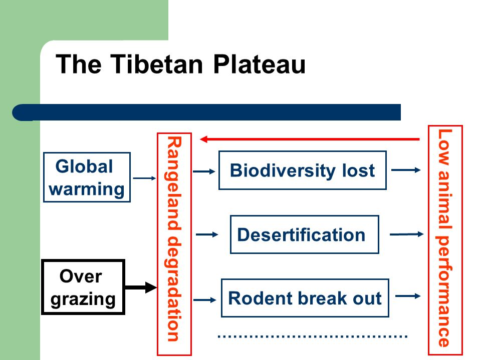 The Tibetan Plateau Global warming Over grazing Biodiversity lost Desertification Rodent break out Rangeland degradation Low animal performance ………………………………
