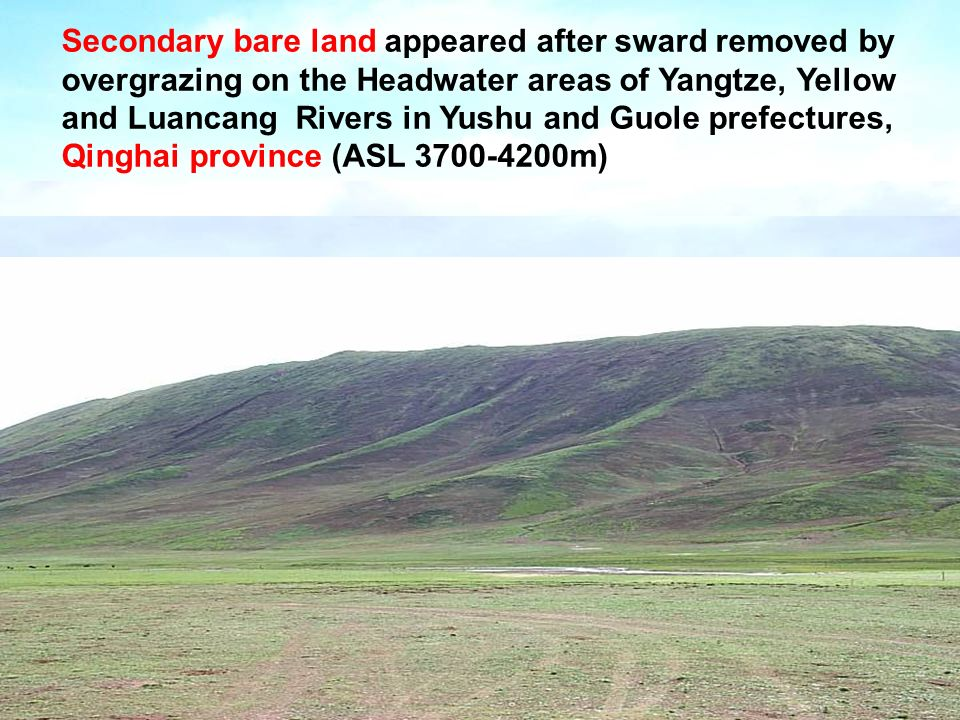 Secondary bare land appeared after sward removed by overgrazing on the Headwater areas of Yangtze, Yellow and Luancang Rivers in Yushu and Guole prefectures, Qinghai province (ASL m)