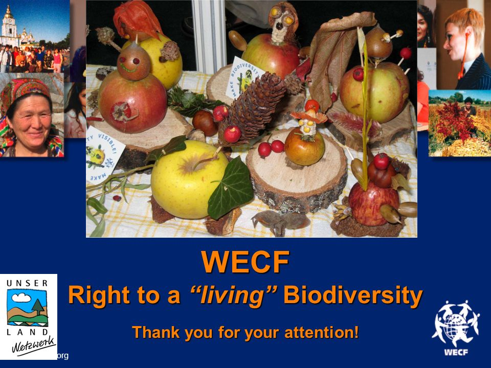 WECF Right to a living Biodiversity Thank you for your attention! www.wecf.org