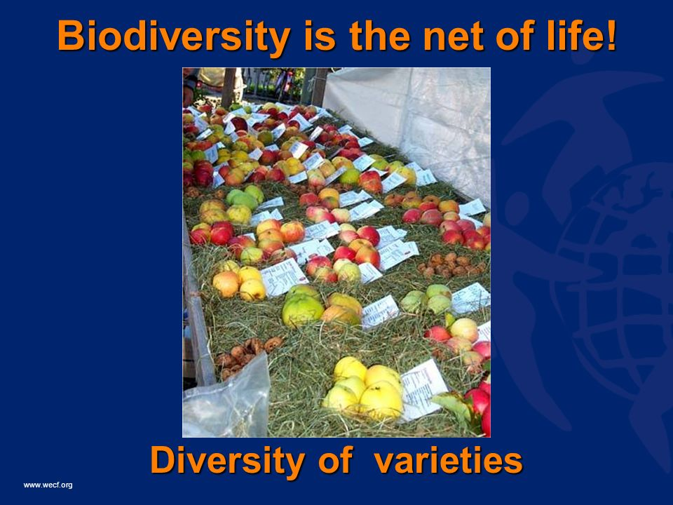 www.wecf.org Biodiversity is the net of life! Diversity of varieties