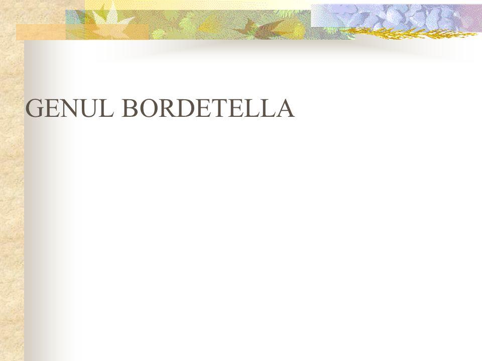 GENUL BORDETELLA