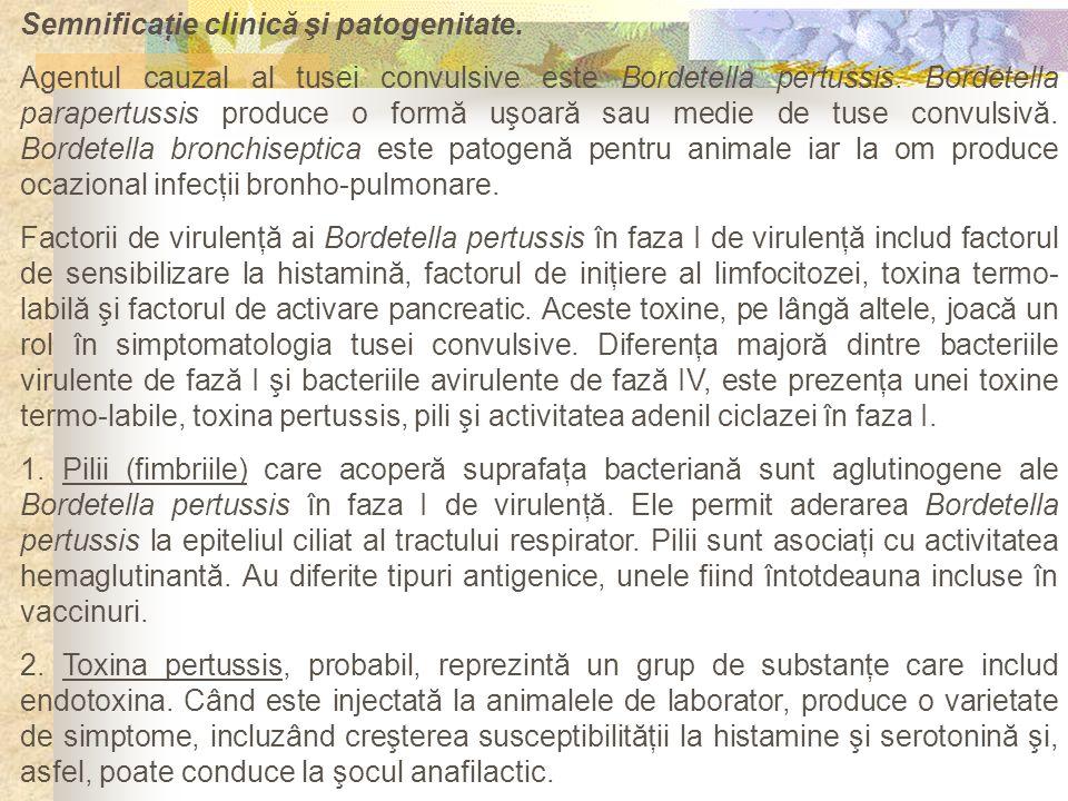 Semnificaţie clinică şi patogenitate. Agentul cauzal al tusei convulsive este Bordetella pertussis. Bordetella parapertussis produce o formă uşoară sa