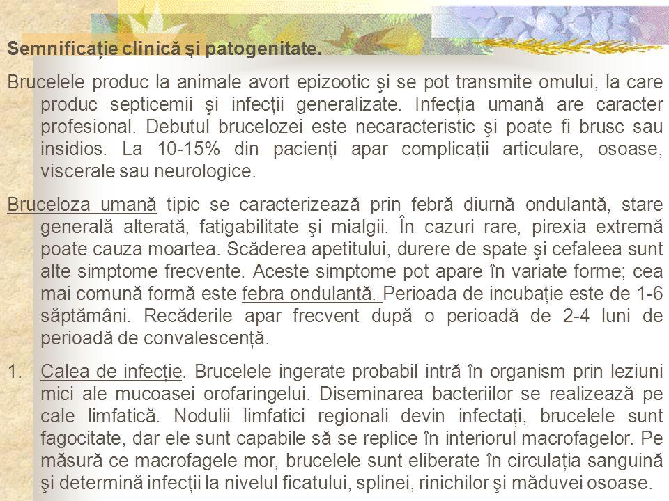 Semnificaţie clinică şi patogenitate. Brucelele produc la animale avort epizootic şi se pot transmite omului, la care produc septicemii şi infecţii ge