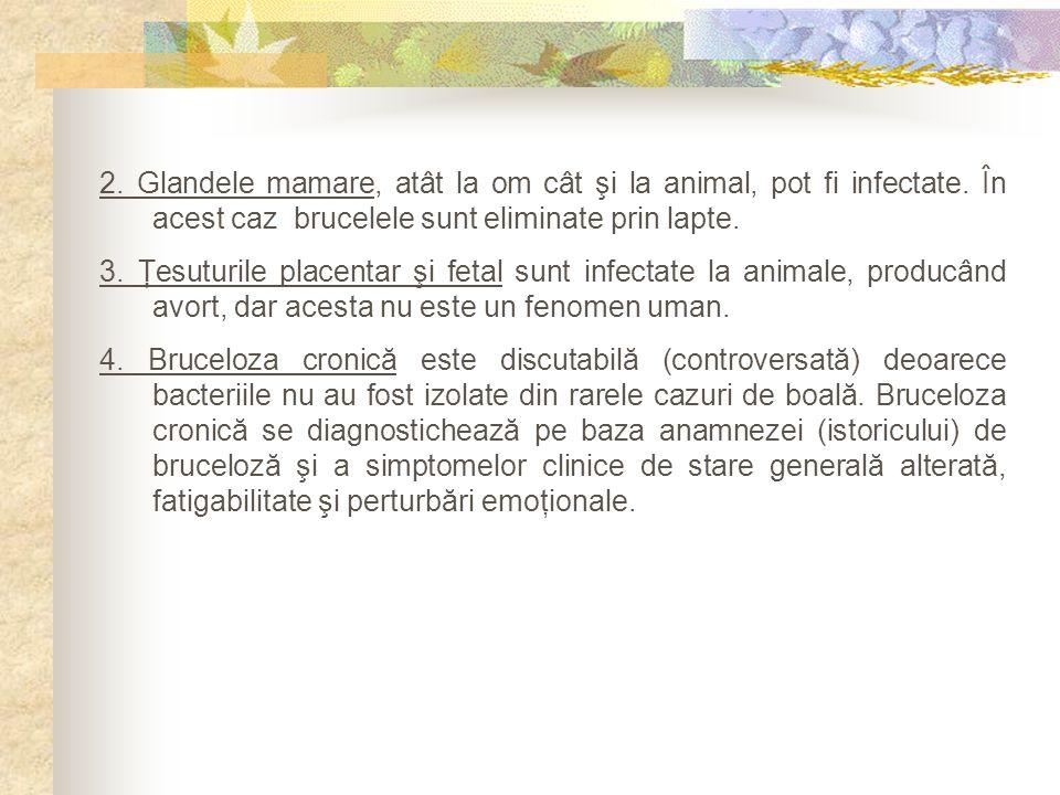 2. Glandele mamare, atât la om cât şi la animal, pot fi infectate. În acest caz brucelele sunt eliminate prin lapte. 3. Ţesuturile placentar şi fetal