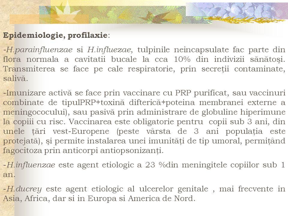 Epidemiologie, profilaxie : -H.parainfluenzae si H.influezae, tulpinile neincapsulate fac parte din flora normala a cavitatii bucale la cca 10% din in