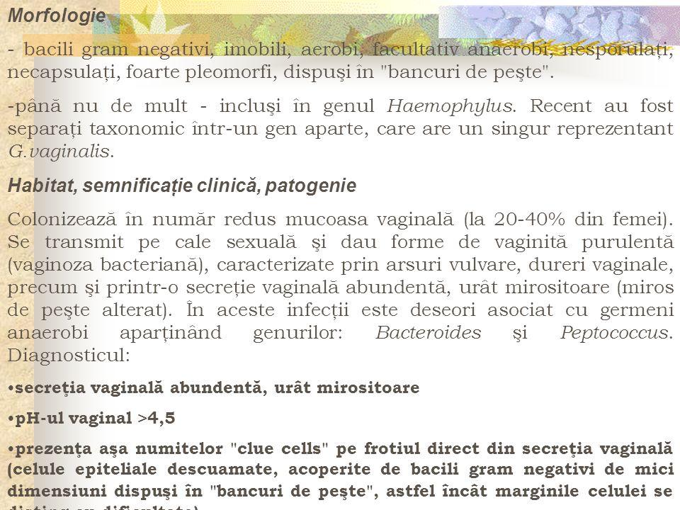 Morfologie - bacili gram negativi, imobili, aerobi, facultativ anaerobi, nesporulaţi, necapsulaţi, foarte pleomorfi, dispuşi în