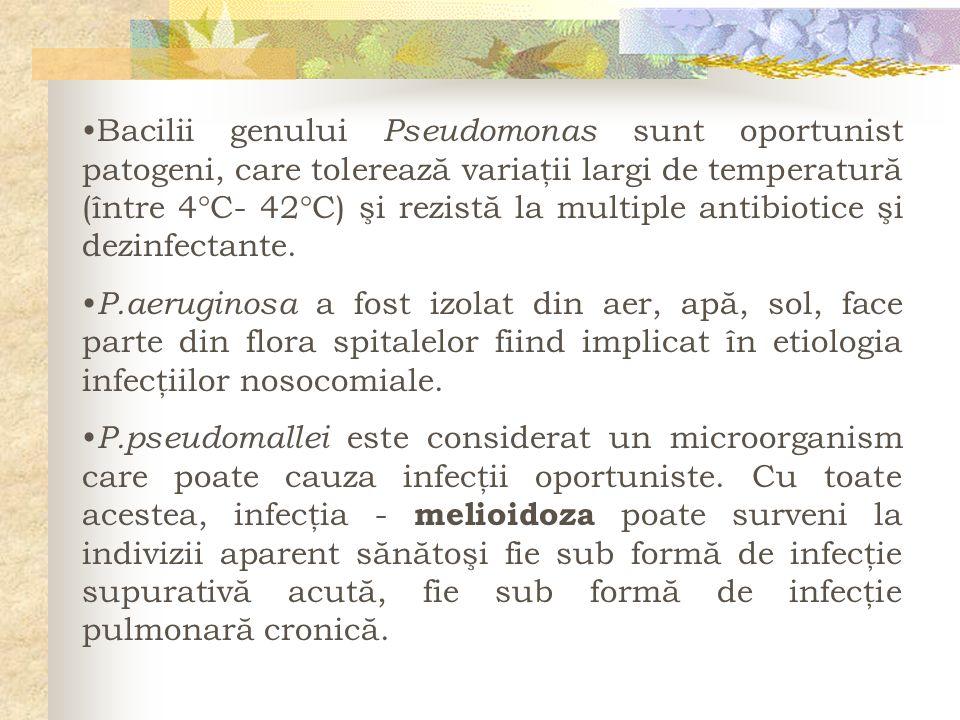 Bacilii genului Pseudomonas sunt oportunist patogeni, care tolerează variaţii largi de temperatură (între 4 C- 42 C) şi rezistă la multiple antibiotic