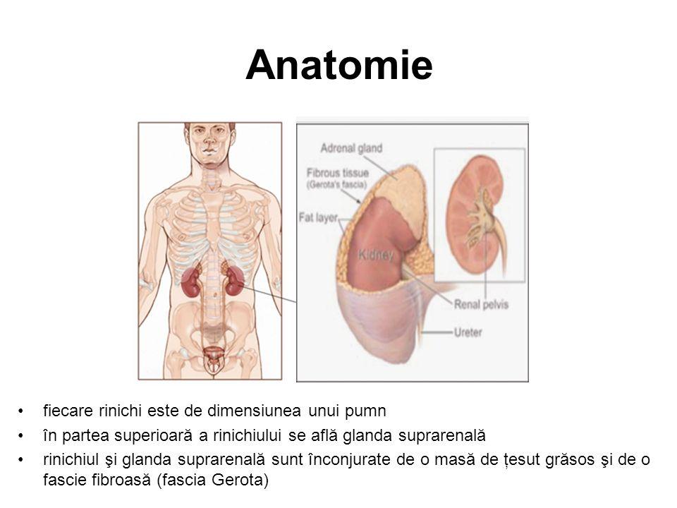 Chirurgia Orhiectomia inghinală radicală –înlăturarea testiculului afectat –manevră diagnostică şi terapeutică –rareori este afectată erecţia normală –bărbaţii cu afectare sexuală ar trebui să efectueze dozare serică de testosteron –protezare – implant de testicul artificial Orhiectomia bilaterală –în cancerele bilaterale –unii pacienţi decid prelevare şi stocare de spermă anterior intervenţiei chirurgicale –este necesar tratamentul de substituţie hormonală Disecţia ganglionară retroperitoneală –înlăturarea ganglionilor retroperitoneali –efectuată în 2 situaţii: tumoră non-seminomatoasă stadiul I sau IIa tumoră retroperitoneală restantă după terminarea chimioterapiei pentru boala avansată