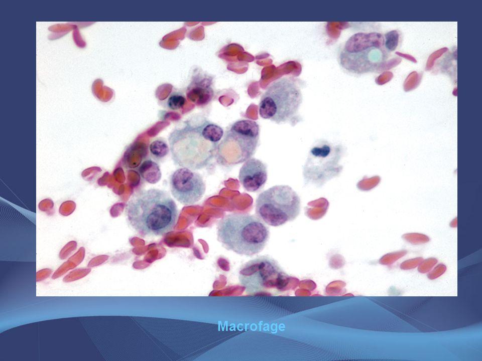 Macrofage