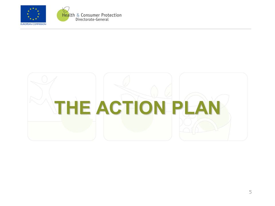 5 THE ACTION PLAN