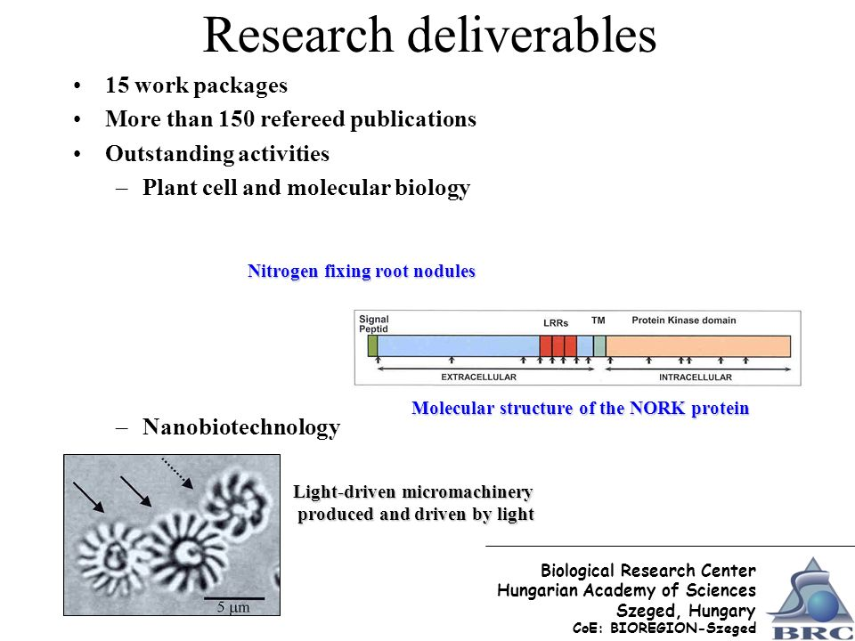Research deliverables 15 work packages More than 150 refereed publications Outstanding activities –Plant cell and molecular biology –Nanobiotechnology Light-driven micromachinery produced and driven by light produced and driven by light Molecular structure of the NORK protein Nitrogen fixing root nodules Biological Research Center Hungarian Academy of Sciences Szeged, Hungary CoE: BIOREGION-Szeged