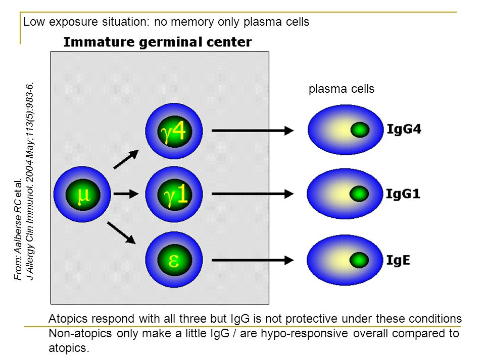 Low exposure situation: no memory only plasma cells plasma cells Atopics respond with all three but IgG is not protective under these conditions Non-atopics only make a little IgG / are hypo-responsive overall compared to atopics.