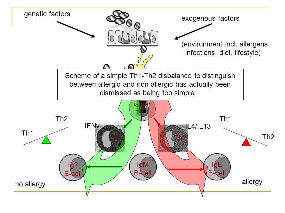 Ig? B-cell DC Th1 Th2 naïve Th IgM B-cell Th1 Th2 no allergy IL4/IL13 IFNγ Th1 Th2 allergy IgE B-cell genetic factors exogenous factors (environment i