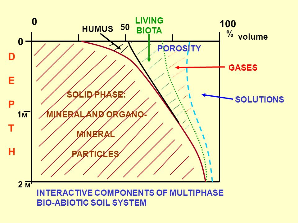 0 100 DEPTHDEPTH % volume 50 INTERACTIVE COMPONENTS OF MULTIPHASE BIO-ABIOTIC SOIL SYSTEM SOLID PHASE: MINERAL AND ORGANO- MINERAL PARTICLES HUMUS LIV