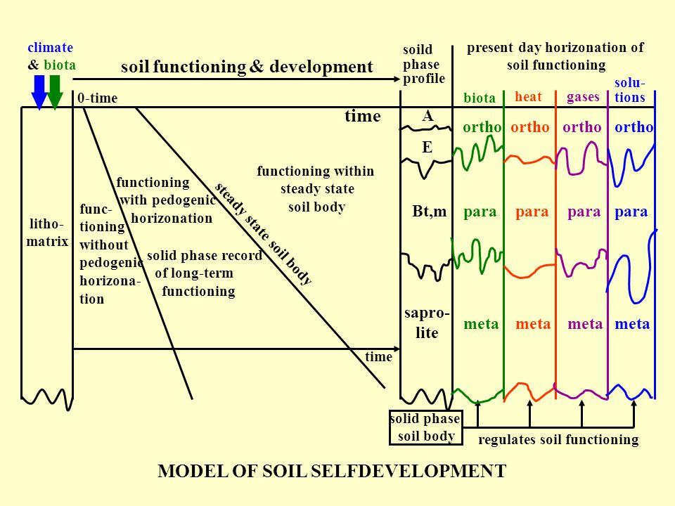 litho- matrix biota soild phase profile heatgases solu- tions A E Bt,m sapro- lite ortho para meta time soil functioning & development climate & biota