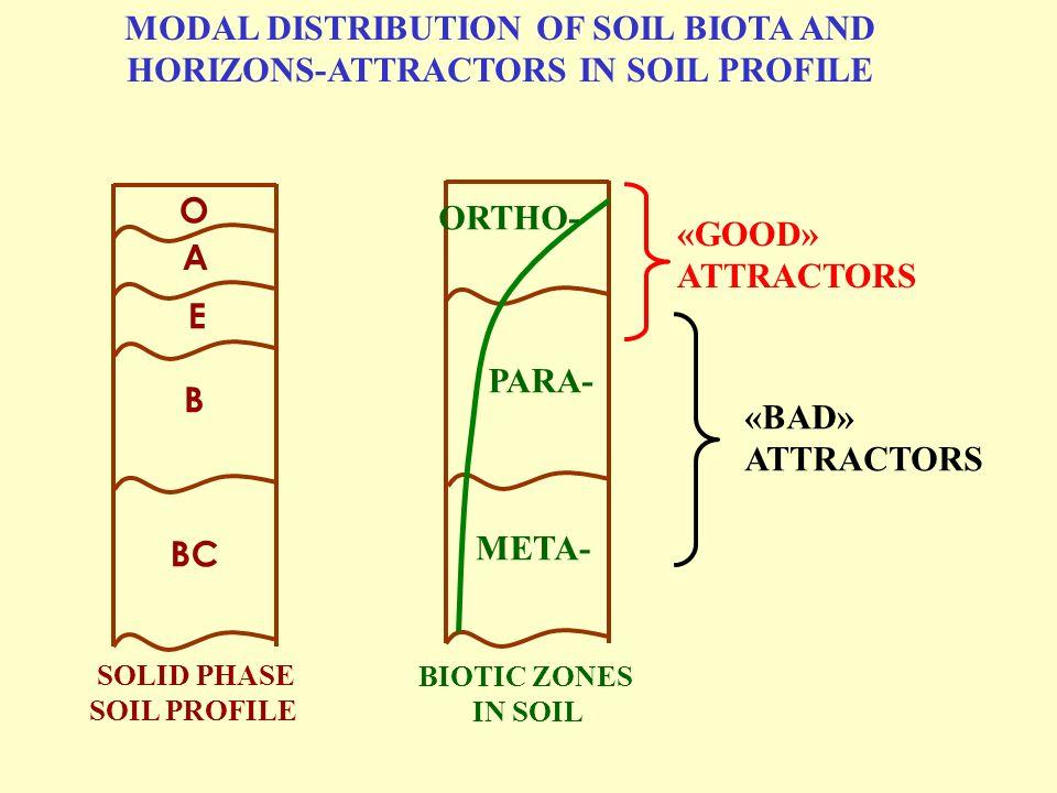 MODAL DISTRIBUTION OF SOIL BIOTA AND HORIZONS-ATTRACTORS IN SOIL PROFILE О А Е В ВС ORTHО- РАRA- МЕТА- BIOTIC ZONES IN SOIL SOLID PHASE SOIL PROFILE «