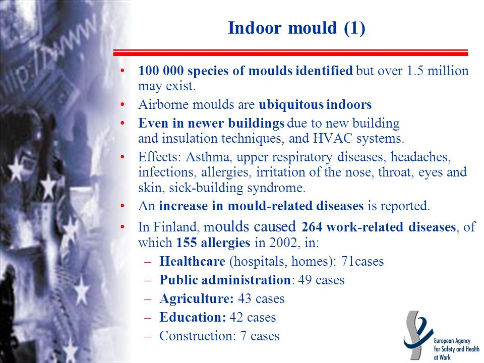 Indoor mould (1) 100 000 species of moulds identified but over 1.5 million may exist.