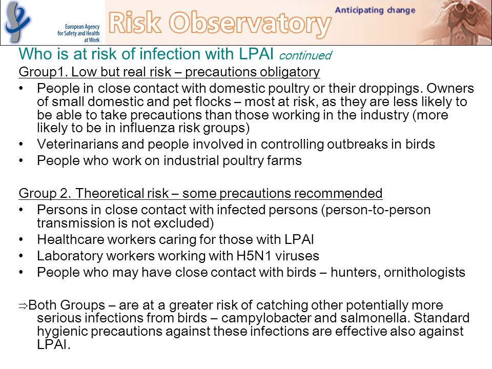 Who is at risk of infection with LPAI continued Group1. Low but real risk – precautions obligatory People in close contact with domestic poultry or th