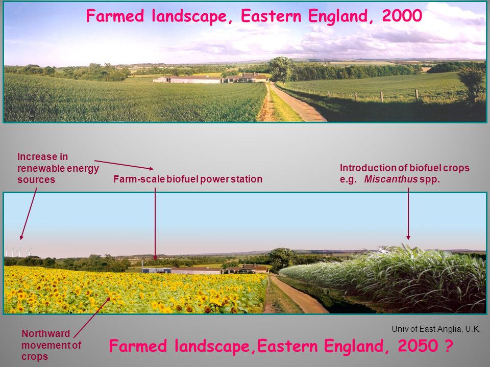 Farmed landscape,Eastern England, 2050 ? Univ of East Anglia, U.K. Northward movement of crops Farm-scale biofuel power station Introduction of biofue