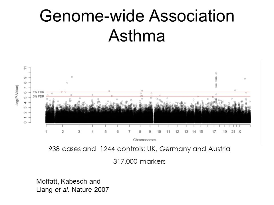 Genome-wide Association Asthma 938 cases and 1244 controls: UK, Germany and Austria 317,000 markers Moffatt, Kabesch and Liang et al. Nature 2007