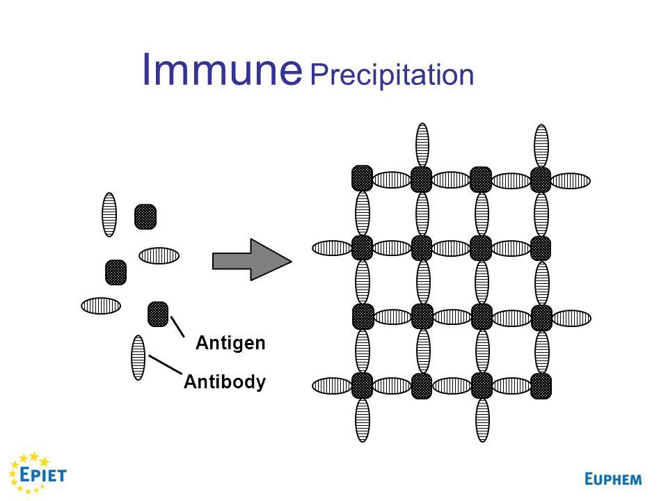 Immune Precipitation Antigen Antibody