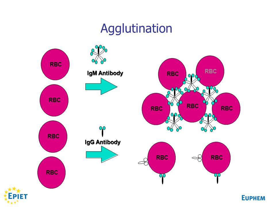 Agglutination RBC IgM Antibody IgG Antibody RBC