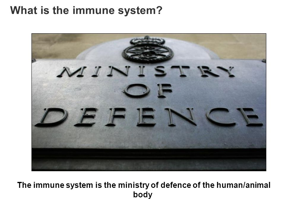 What is the immune system? The immune system is the ministry of defence of the human/animal body