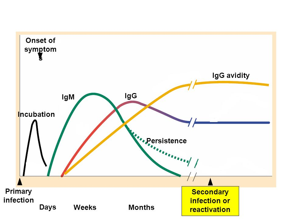 Onset of symptom s Primary infection Incubation IgM IgG Persistence IgG avidity Days WeeksMonthsYears Secondary infection or reactivation