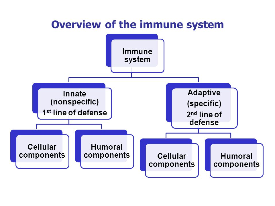 Immune system Innate (nonspecific) 1 st line of defense Cellular components Humoral components Adaptive (specific) 2 nd line of defense Cellular compo