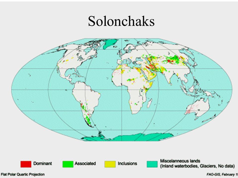 Solonchaks