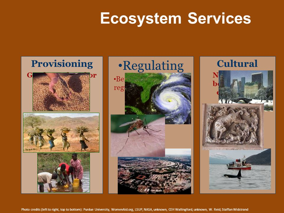 Ecosystem Services Regulating Benefits obtained from regulation of ecosystem processes Cultural Non-material benefits from ecosystems Provisioning Goo