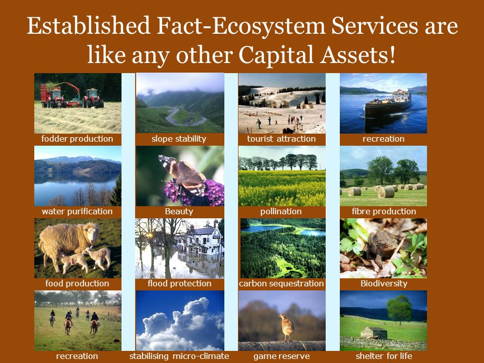Economics of Ecosystem Services Ecosystem Services Benefits people obtain from ecosystems Conceptual Lenses of Economics Stock Vs Flow Metrics of ES- Stocks (ecological) and flow (ecosystem services) ES are flow on DD and SS side and imbalance would affect the stock!
