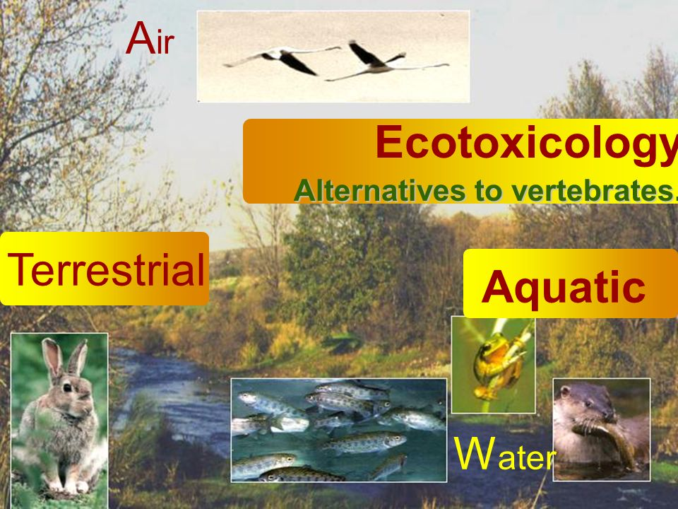 W ater Alternatives to vertebrates. Ecotoxicology Alternatives to vertebrates.