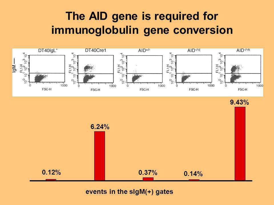 0.12% 6.24% 0.37% 0.14% 9.43% events in the sIgM(+) gates The AID gene is required for immunoglobulin gene conversion