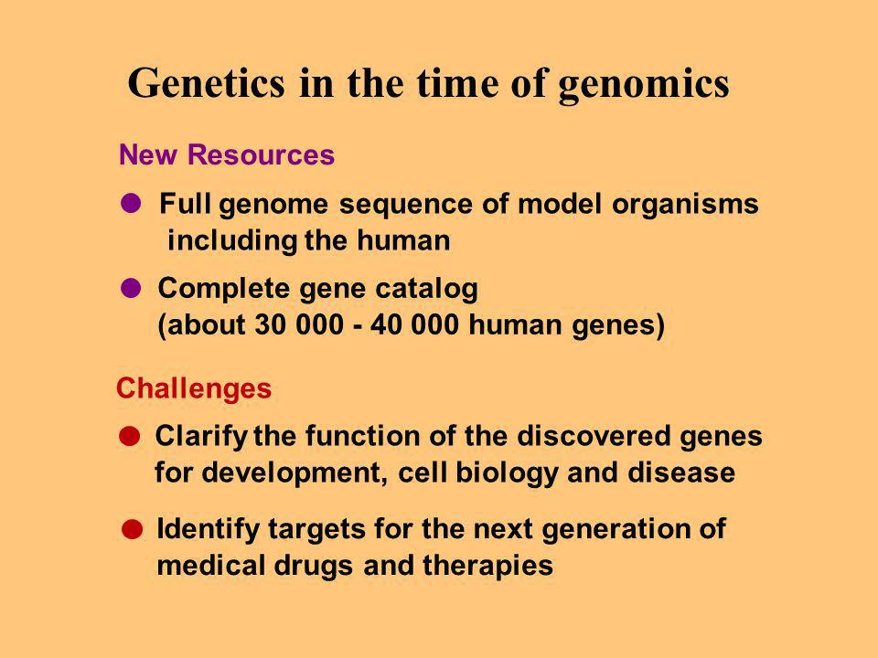 Genetics in the time of genomics Full genome sequence of model organisms including the human Complete gene catalog (about 30 000 - 40 000 human genes) Clarify the function of the discovered genes for development, cell biology and disease Identify targets for the next generation of medical drugs and therapies New Resources Challenges