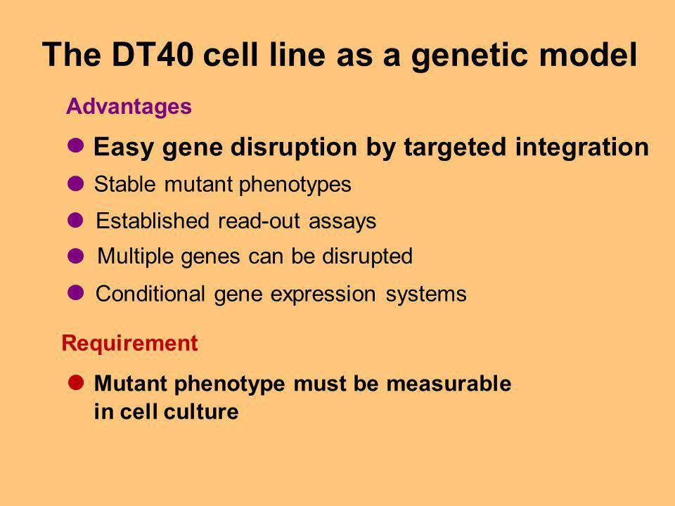 The DT40 cell line as a genetic model Easy gene disruption by targeted integration Stable mutant phenotypes Multiple genes can be disrupted Conditional gene expression systems Established read-out assays Advantages Mutant phenotype must be measurable in cell culture Requirement