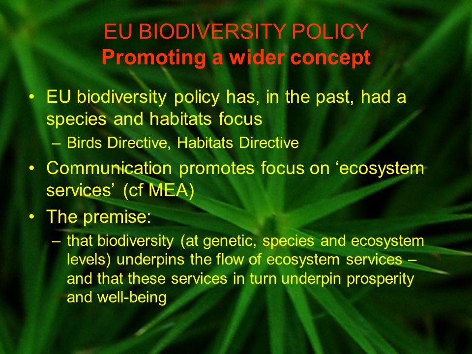 EU BIODIVERSITY POLICY Promoting a wider concept EU biodiversity policy has, in the past, had a species and habitats focus –Birds Directive, Habitats Directive Communication promotes focus on ecosystem services (cf MEA) The premise: –that biodiversity (at genetic, species and ecosystem levels) underpins the flow of ecosystem services – and that these services in turn underpin prosperity and well-being