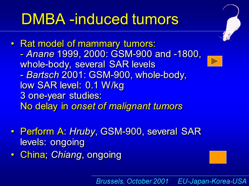 Brussels, October 2001 EU-Japan-Korea-USA DMBA -induced tumors Rat model of mammary tumors: - Anane 1999, 2000: GSM-900 and -1800, whole-body, several SAR levels - Bartsch 2001: GSM-900, whole-body, low SAR level: 0.1 W/kg 3 one-year studies: No delay in onset of malignant tumors Perform A: Hruby, GSM-900, several SAR levels: ongoing China; Chiang, ongoing Rat model of mammary tumors: - Anane 1999, 2000: GSM-900 and -1800, whole-body, several SAR levels - Bartsch 2001: GSM-900, whole-body, low SAR level: 0.1 W/kg 3 one-year studies: No delay in onset of malignant tumors Perform A: Hruby, GSM-900, several SAR levels: ongoing China; Chiang, ongoing