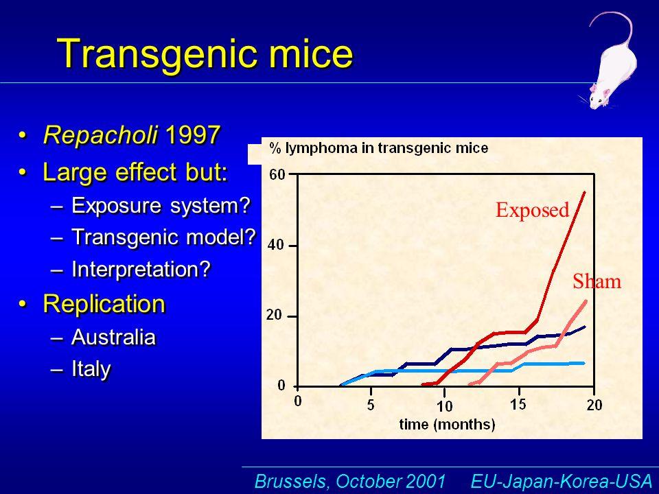 Brussels, October 2001 EU-Japan-Korea-USA B T Transgenic mice Repacholi 1997 Large effect but: –Exposure system.