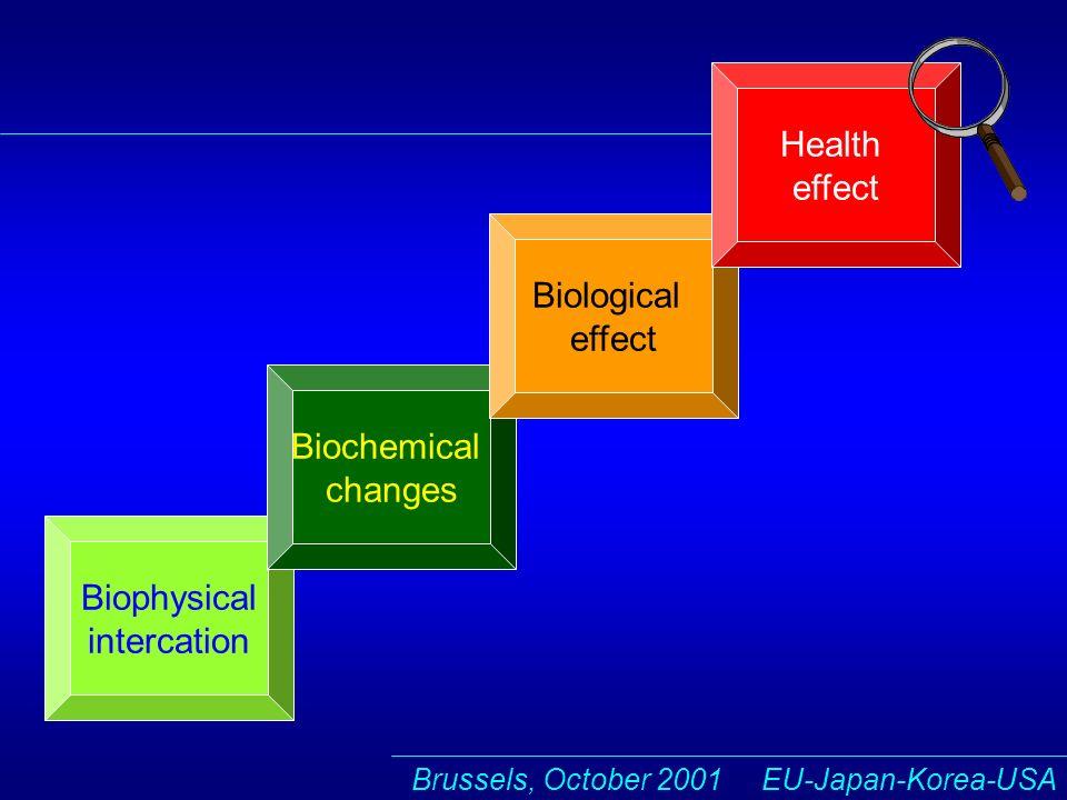 Brussels, October 2001 EU-Japan-Korea-USA Biophysical intercation Biochemical changes Biological effect Health effect