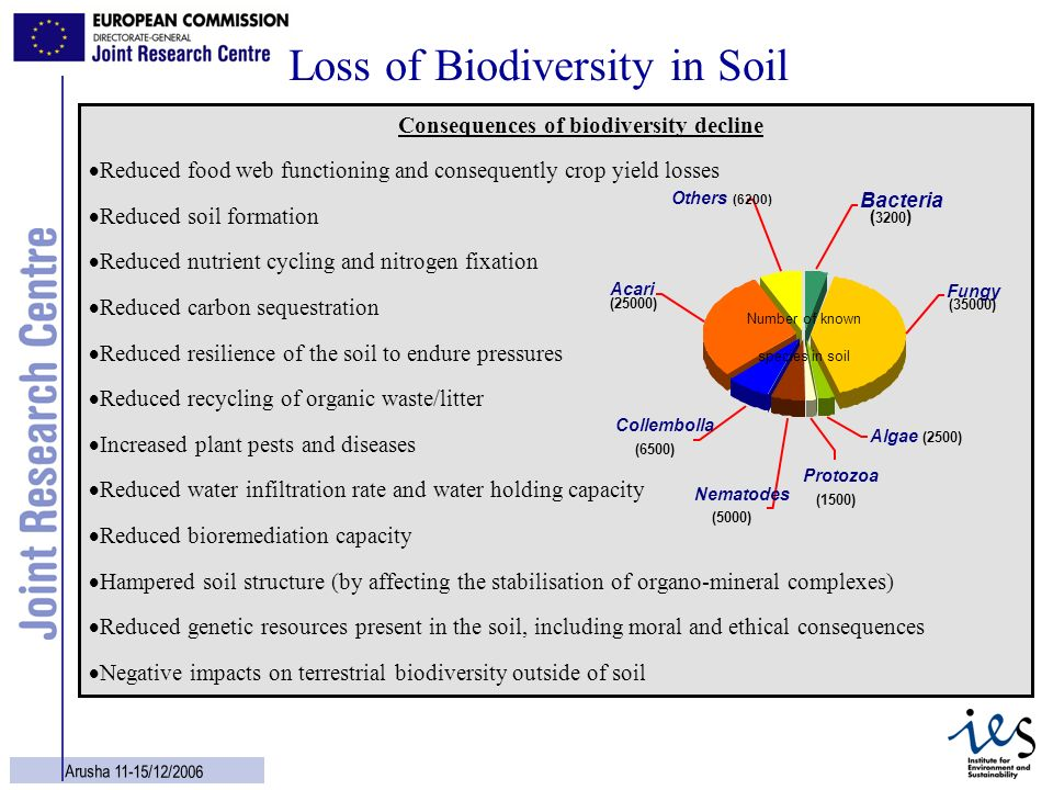 13 Arusha 11-15/12/2006 Loss of Biodiversity in Soil Consequences of biodiversity decline Reduced food web functioning and consequently crop yield los