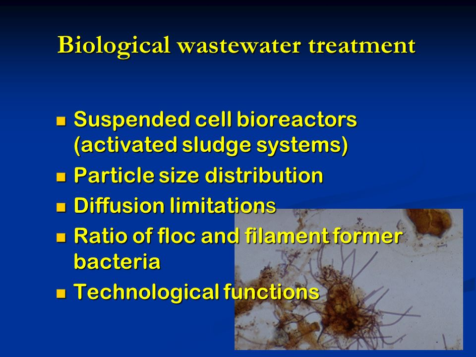 Biological wastewater treatment Suspended cell bioreactors (activated sludge systems) Suspended cell bioreactors (activated sludge systems) Particle size distribution Particle size distribution Diffusion limitation s Diffusion limitation s Ratio of floc and filament former bacteria Ratio of floc and filament former bacteria Technological functions Technological functions